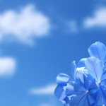 6964781-blue-flower-background