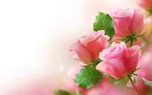 Pretty-Pink-Roses-roses-34610943-2880-1800